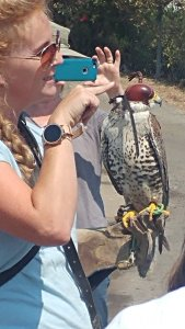 napa falcon tw 23816